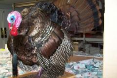 Turkey after 001
